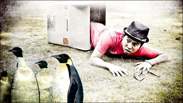 lutte pingouin
